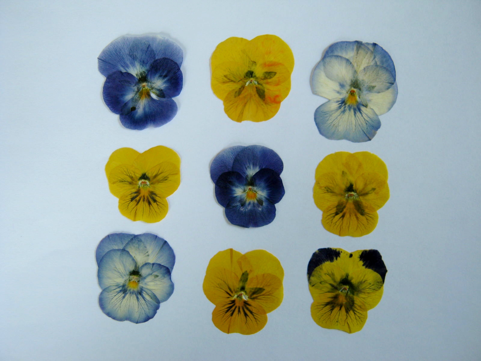 Pressed Flowers – Pressed Flower Tips Part II – MINDING MY P S WITH Q