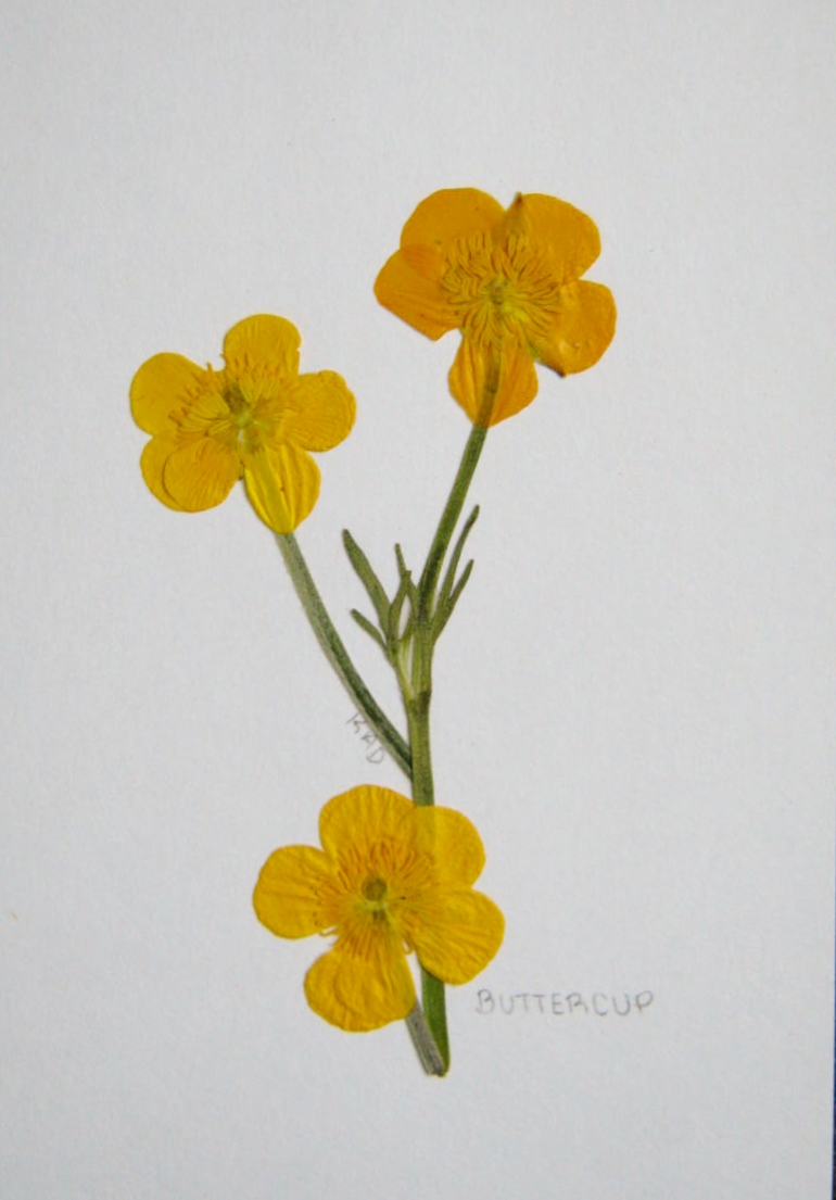 Pressed Flowers – Greeting Cards – MINDING MY P'S WITH Q