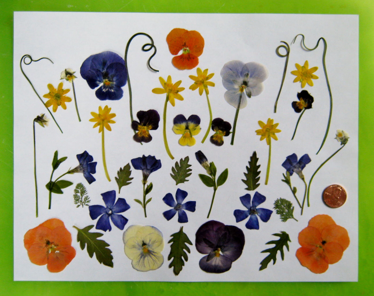 Pressed Flowers – Tips for Pressing and Using Pressed Flowers, Part ...