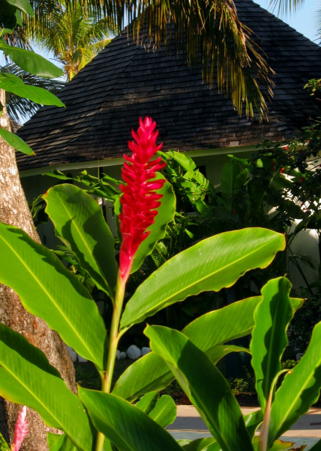 Place and Plants – Jamaican Foliage and Flowers – MINDING MY P S WITH Q