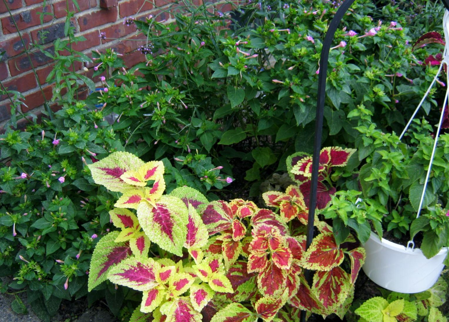 Plants – Flower Garden Update August 2012 – MINDING MY P S WITH Q