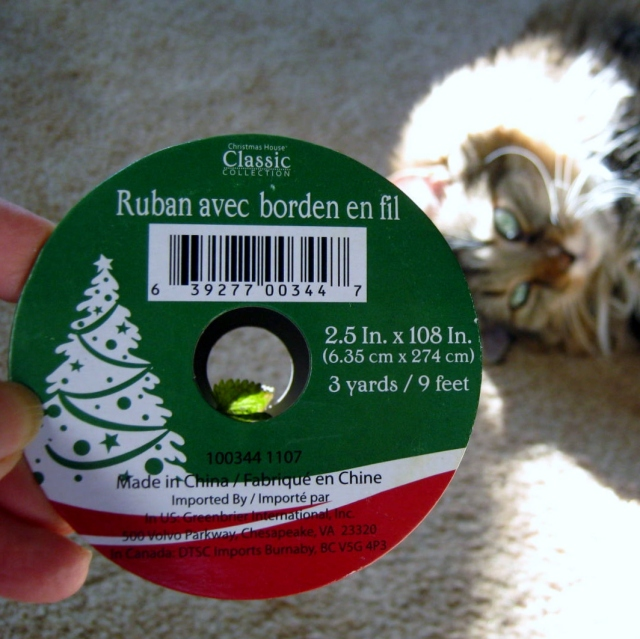 catnip and rusty 009
