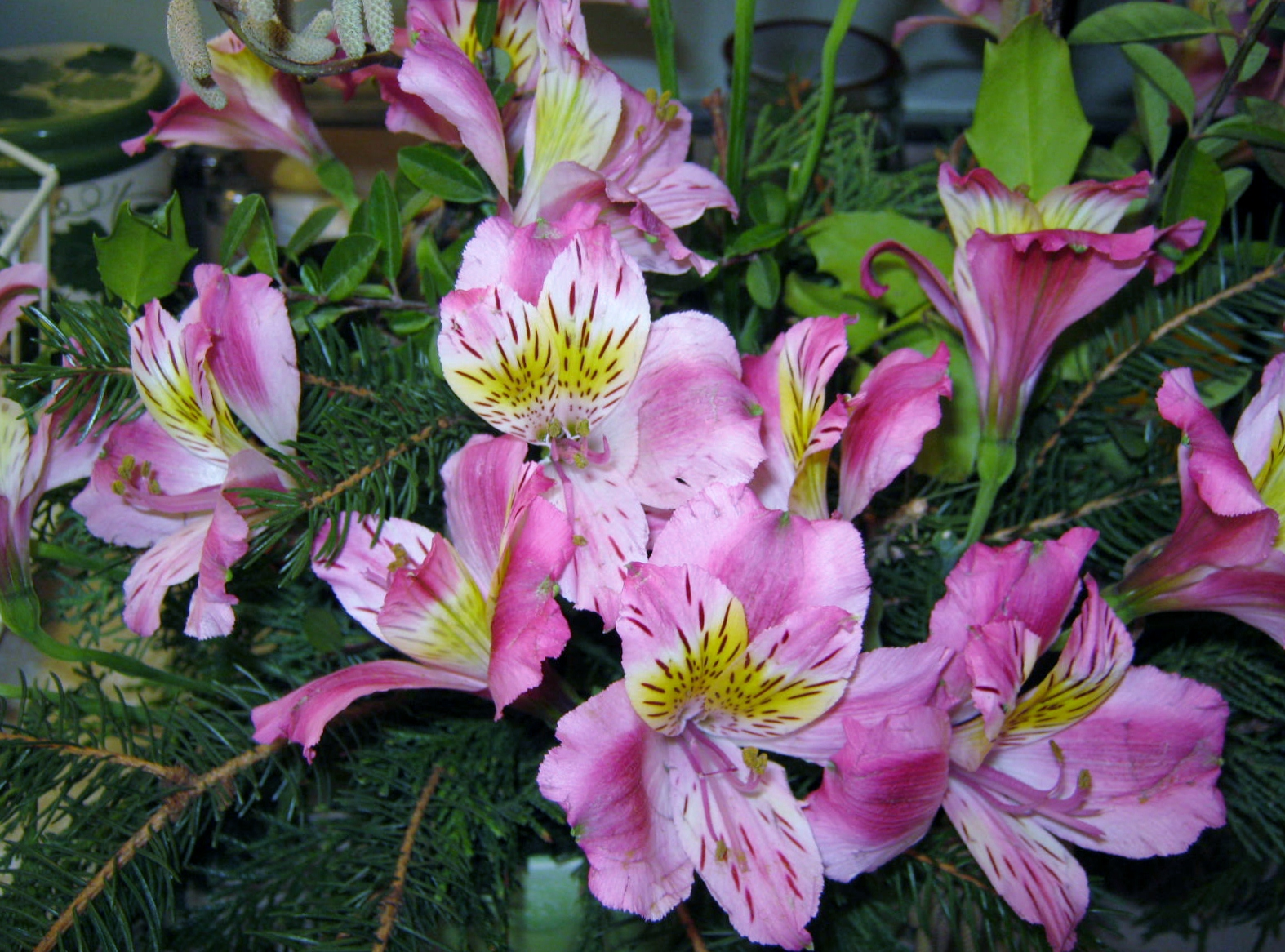 Posies & Plants – Alstroemeria – MINDING MY P S WITH Q