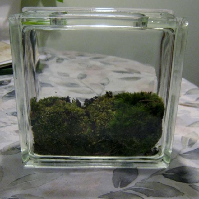 blog terrariums 017
