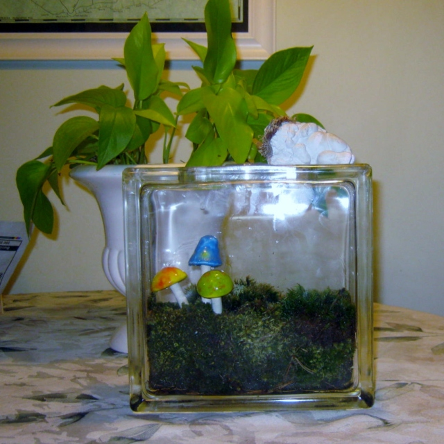 blog terrariums 026