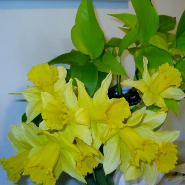 Daffodil and Bettas 002