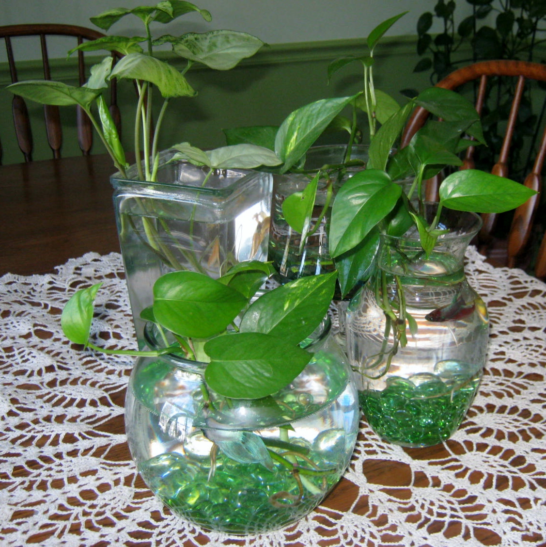 Wp images betta fish post 11 for Betta fish plant