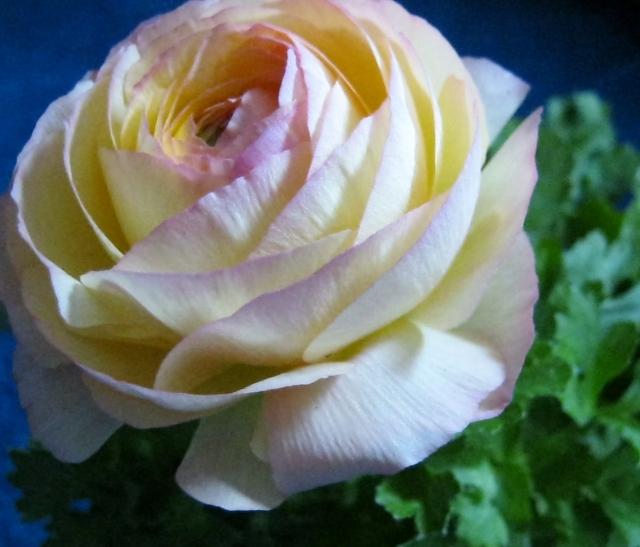 blog flowers 010
