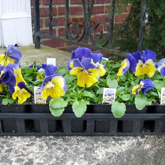 spring blog 001