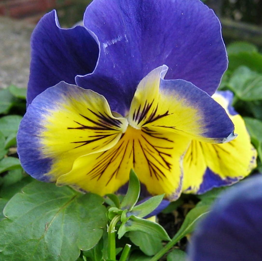 spring blog 002