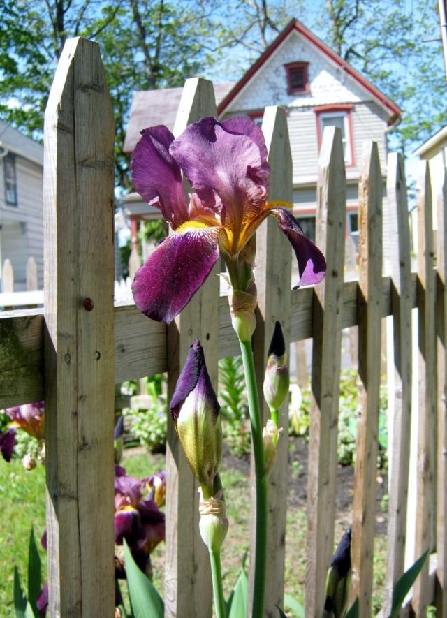 iris hunt 036