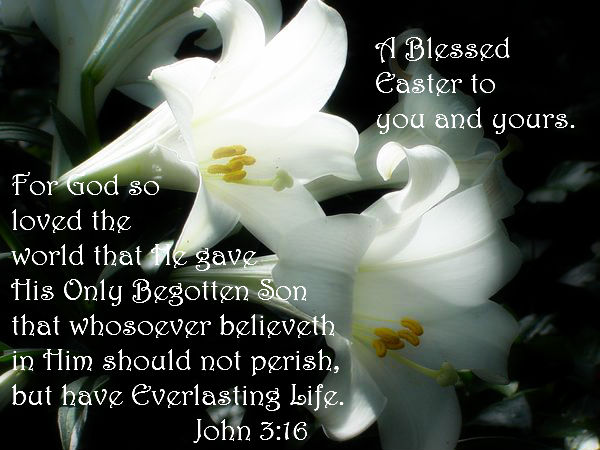 Mustcreate Easter Lilies
