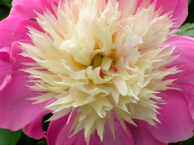 42113-flowers_284_Copy