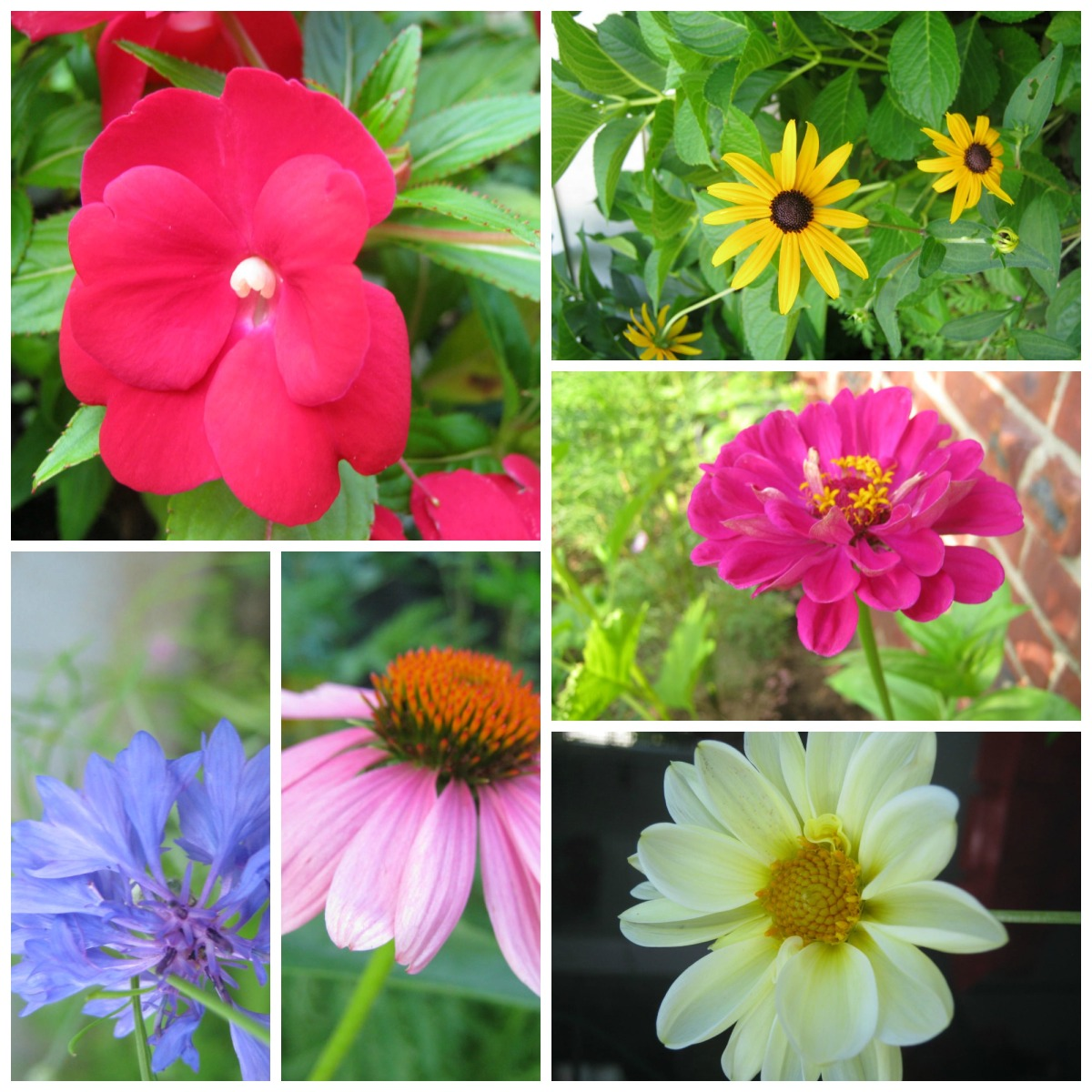 These flowers are growing in my garden this week.