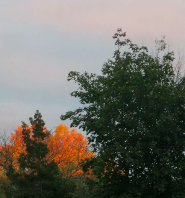Echoes From the Burning Bush
