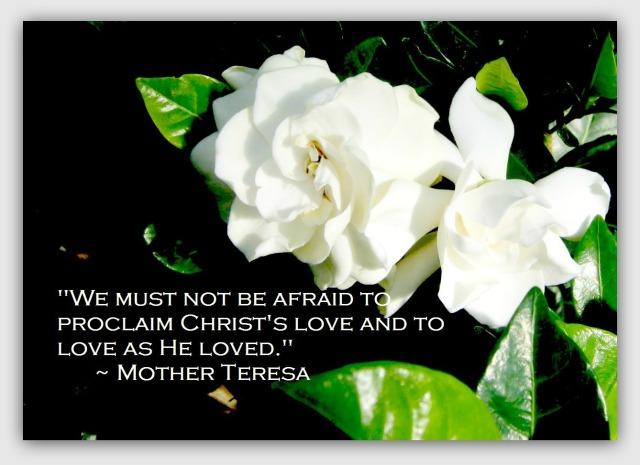 Longwood Gardenia Quote
