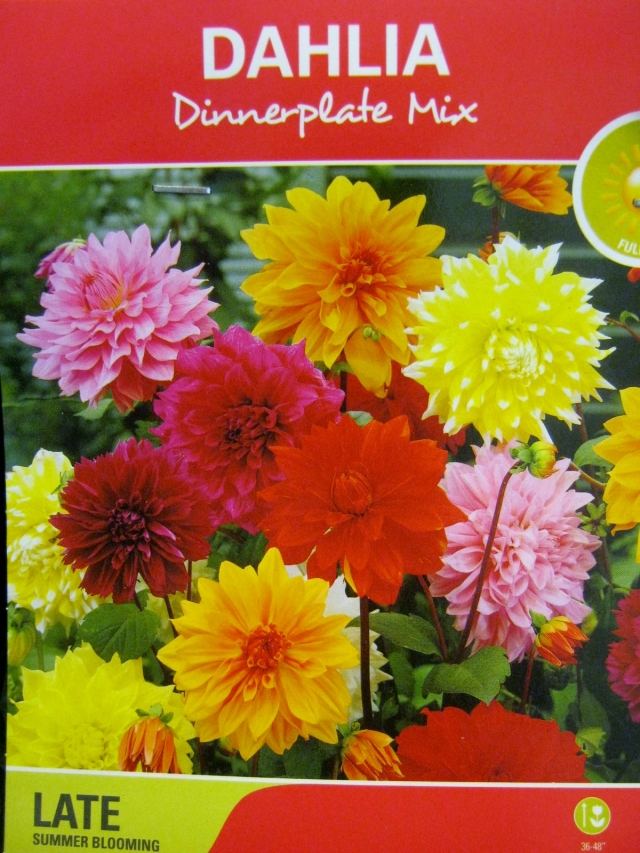 Dinnerplate Dahlia Tubers