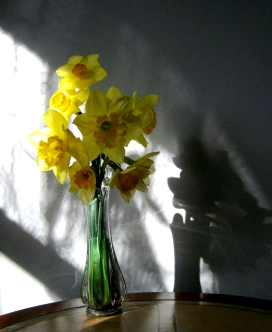 Daffodils in Morning Light