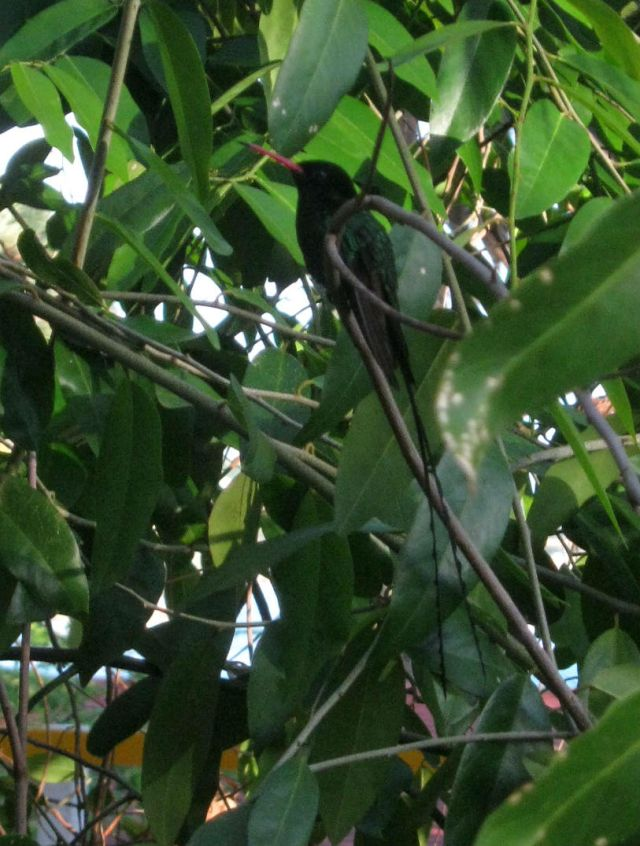 Dr. Bird in tree