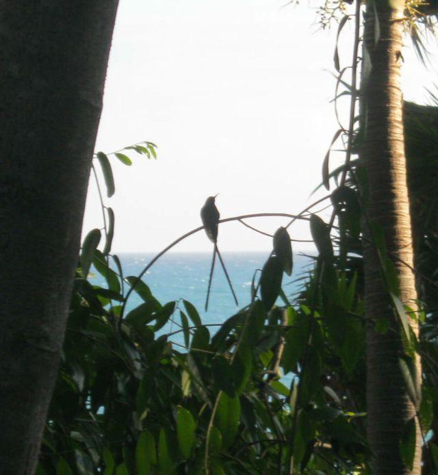 Silhouette Dr. Bird