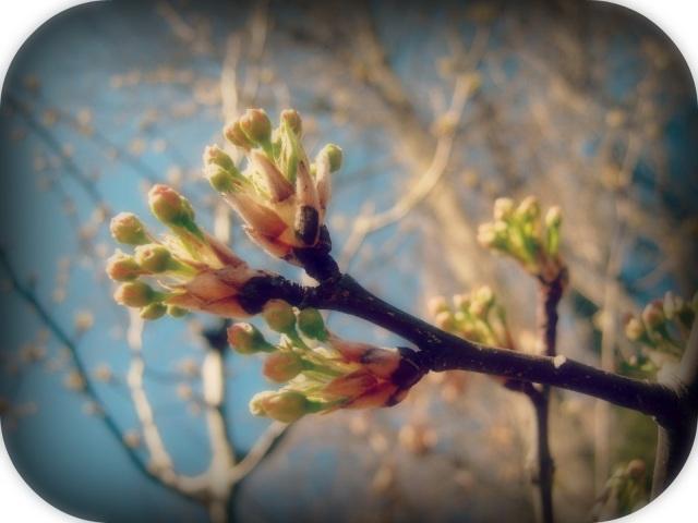 spring buds for blog