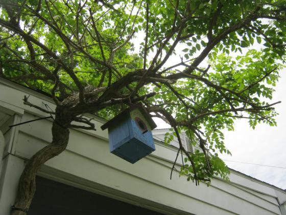 Birdie, birdie in the tree