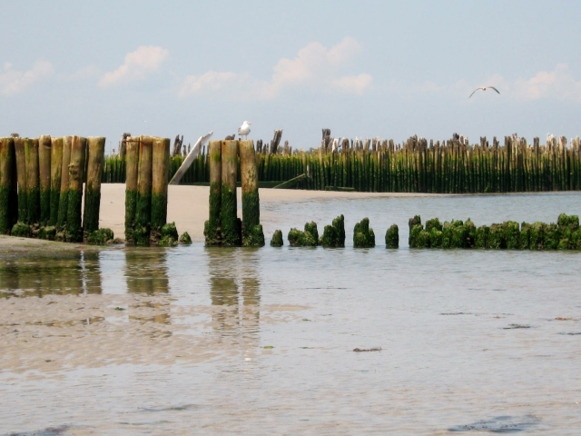 The pilings at Strathmere