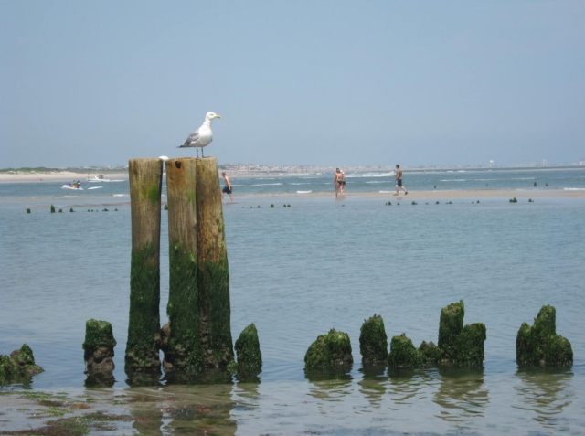 Pilings worn away by the force of the ocean waves
