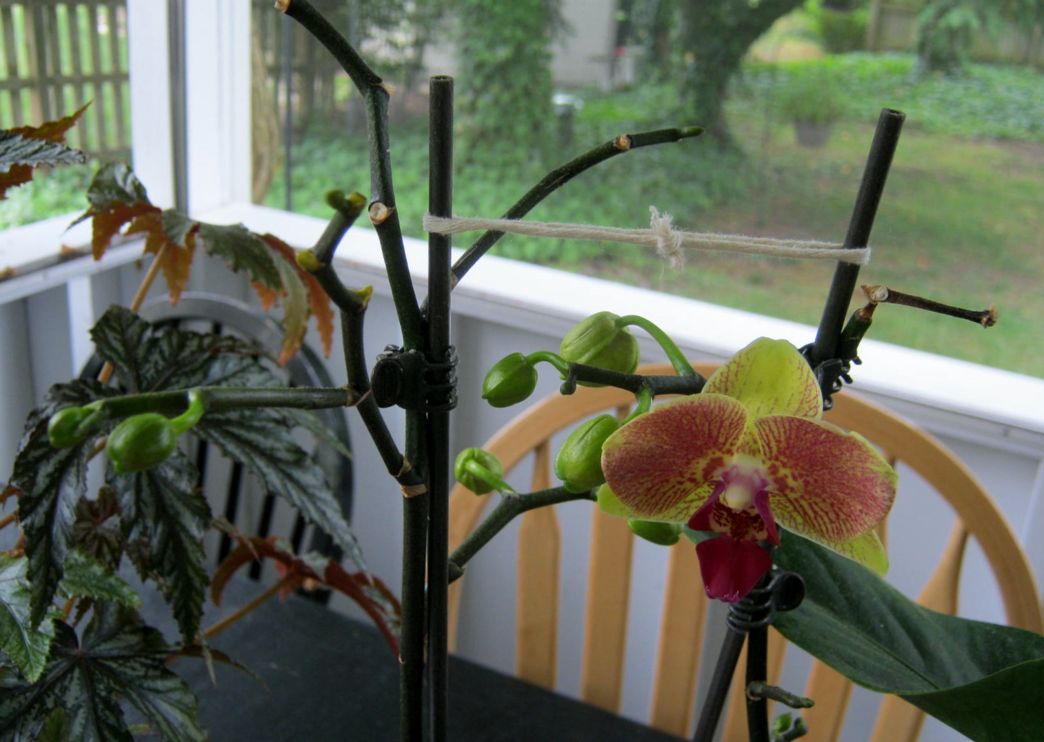 Orchid Minding My P S With Q