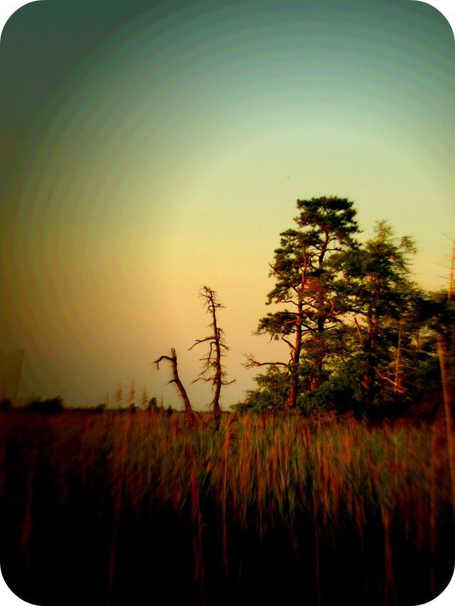 trees at sunset jpg