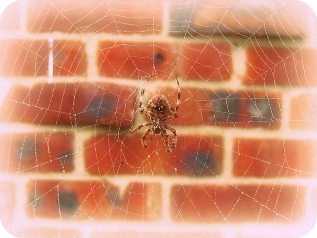 bricked web