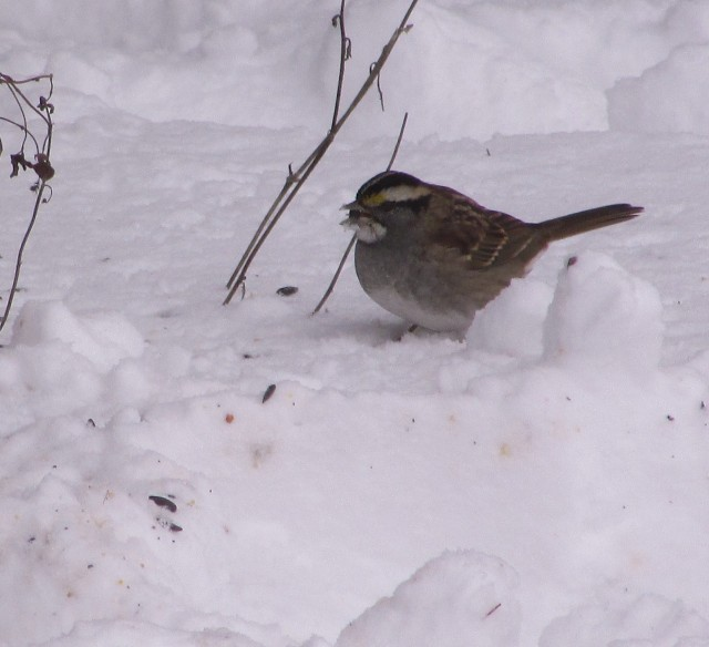 birds in snow 2
