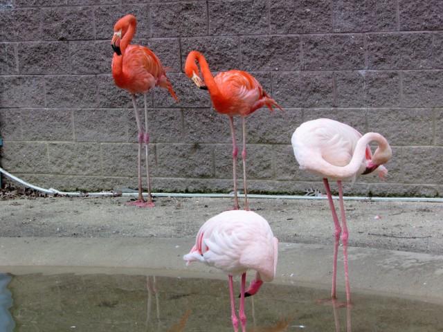 Flamingo pairs