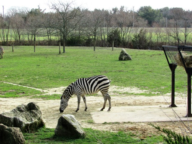cape may zoo 46