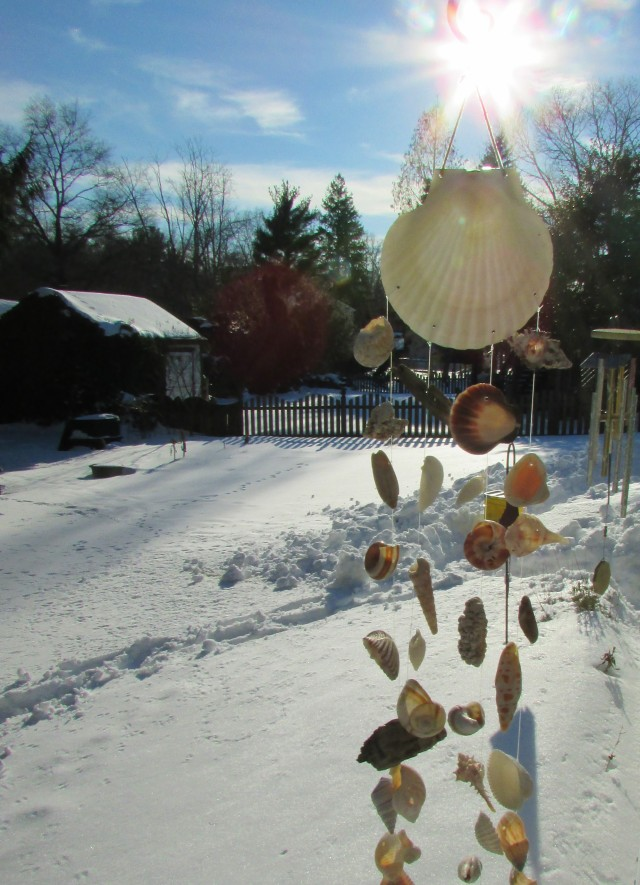 seashells, snow and sunshine