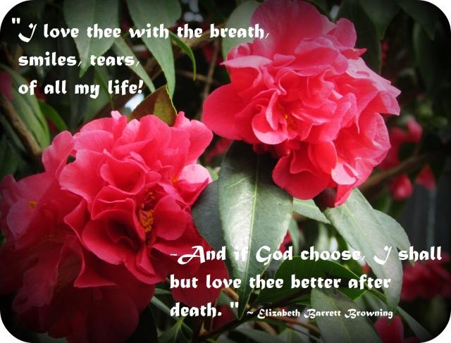 Valentine's Day Camellia