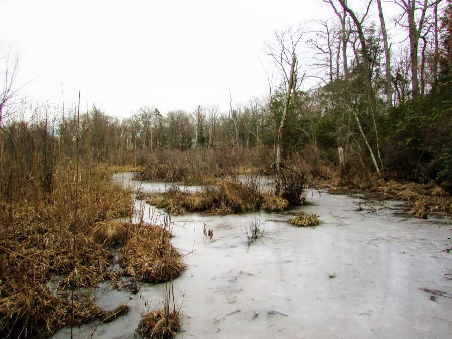 winterlandscape5