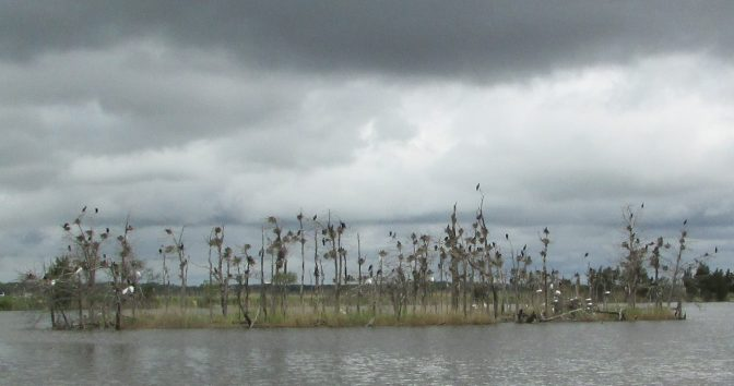 Place – Delaware Bay at Heislerville/Shore Birds Nesting Island