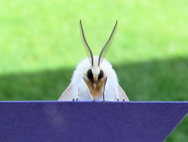 moth 3 (2)