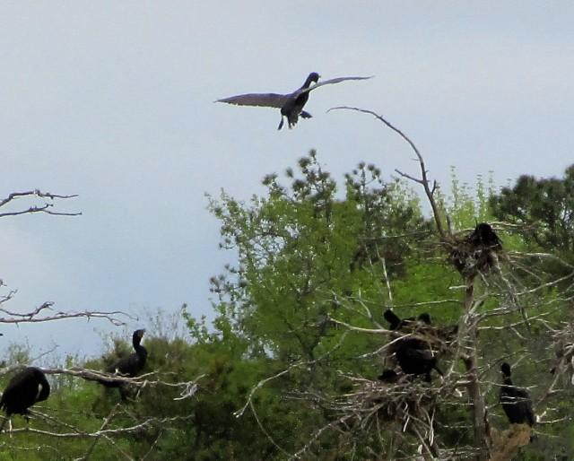 nesting 3