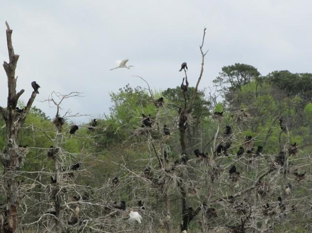 nesting 4