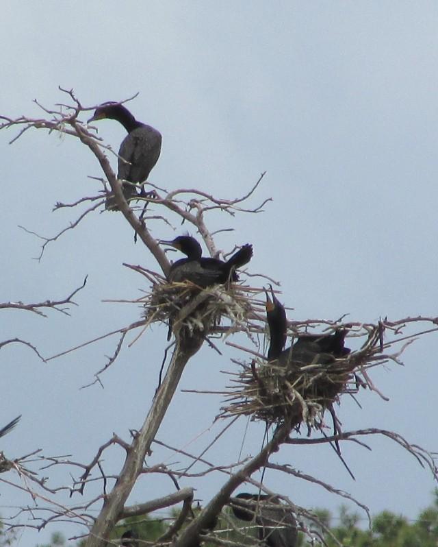nesting 5