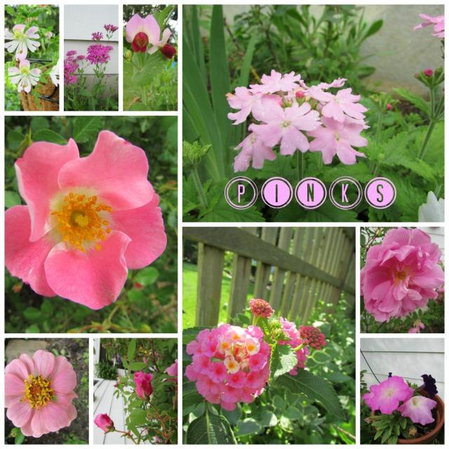 Schizanthus, Catchfly, Verbena, Pod Pea Blossom, Shrub Rose, Zinnia, Rosebud, Lantana, Climbing Rose & Petunias