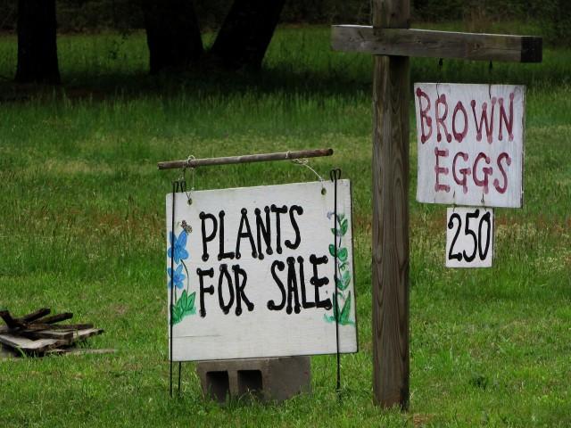 roadside plant stand 2