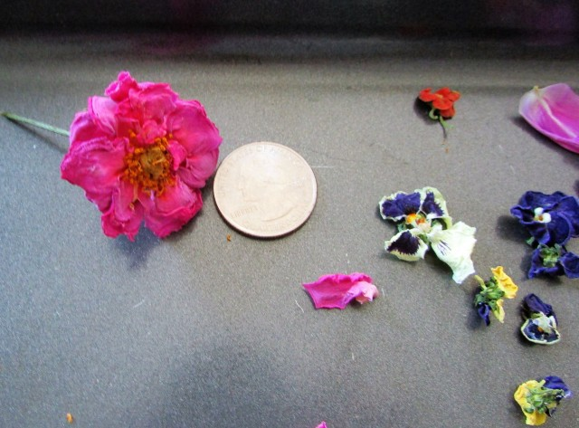 Blue Lagoon rose and pansy with a quarter for scale.