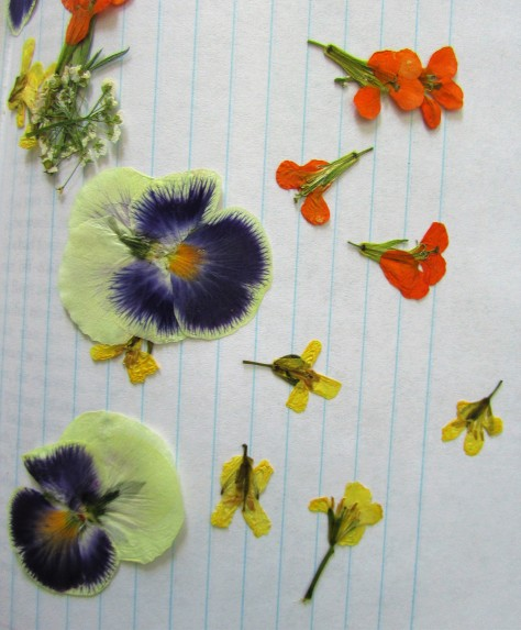 Broccoli florets, lower right, with wallflowers and pansies.
