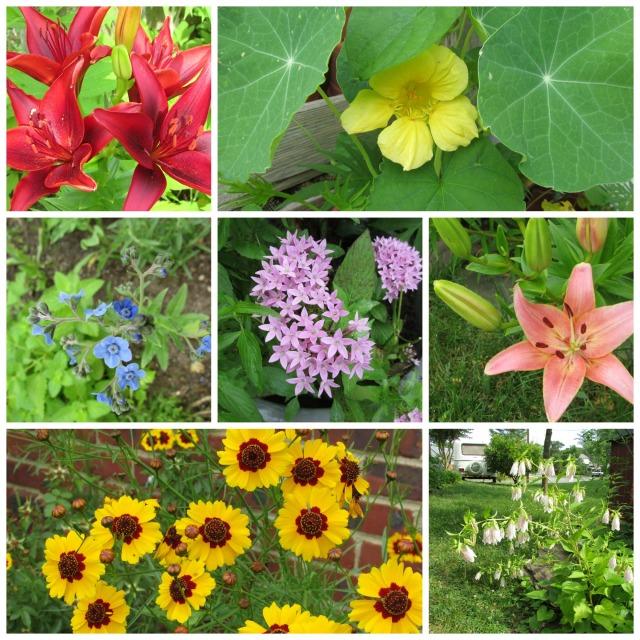 June 22 garden
