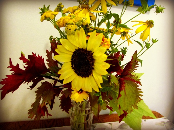 Plants and Problem-Solving  – Sunflowers in Bloom