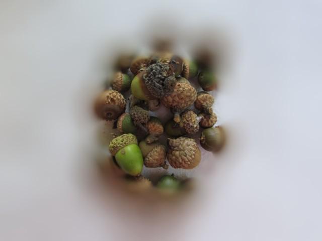 acorn-blur