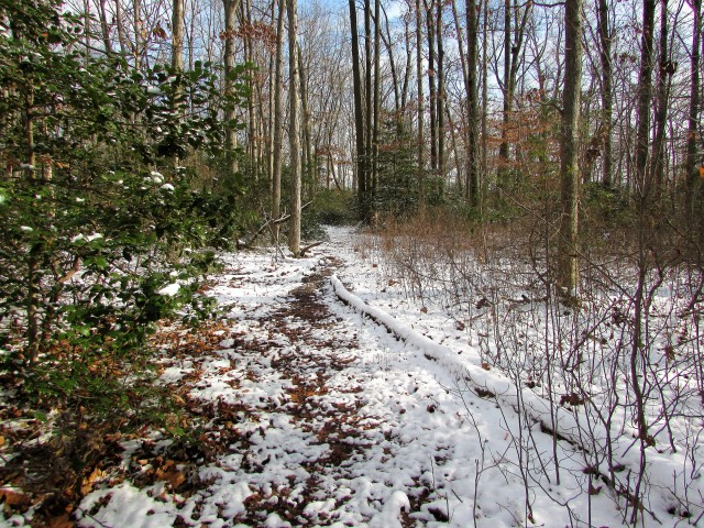 The Woodland Path - January 6, 2017